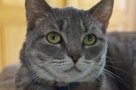 Lisa Ryan Chief Appreciation Strategist Grategy. grey cat