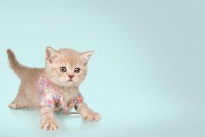 Lisa Ryan of Grategy domestic cat